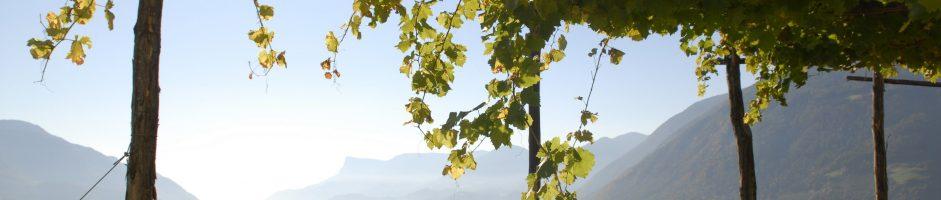 Lievelingsstek voor de herfstdagen: de wijngaarden rondom Meran